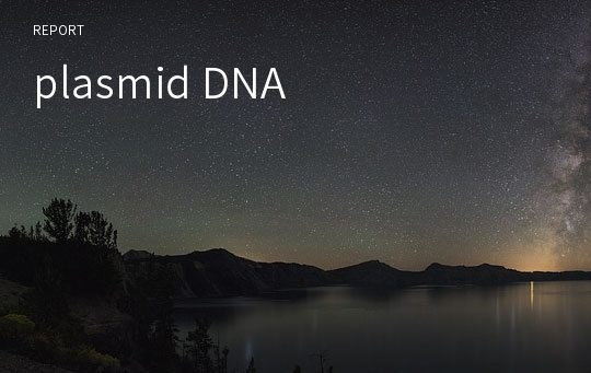 plasmid DNA