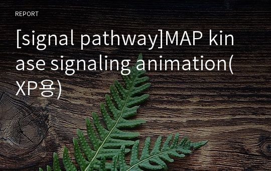 [signal pathway]MAP kinase signaling animation(XP용)
